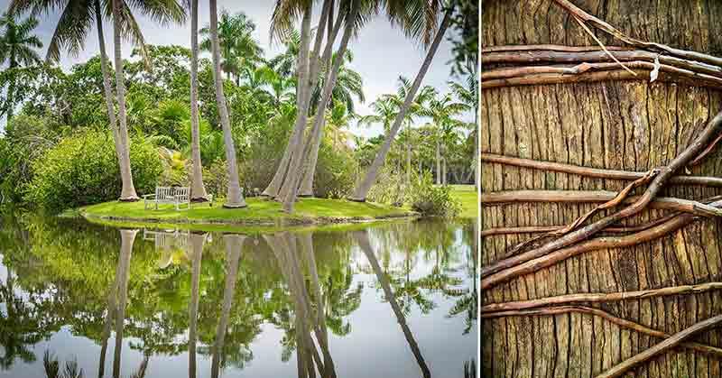 Fairchild Tropical Botanic Garden - Miami