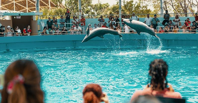 Miami Seaquarium - akvarie och marin temapark