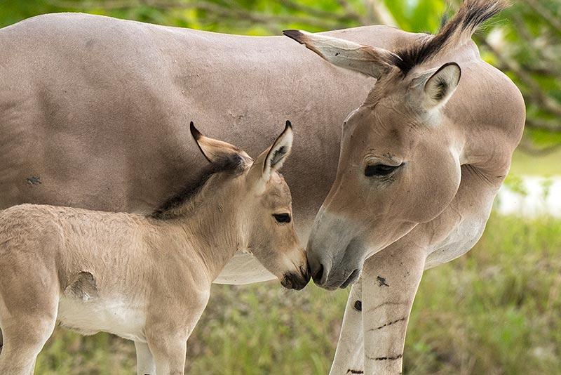 Zoo Miami - djurpark i toppklass